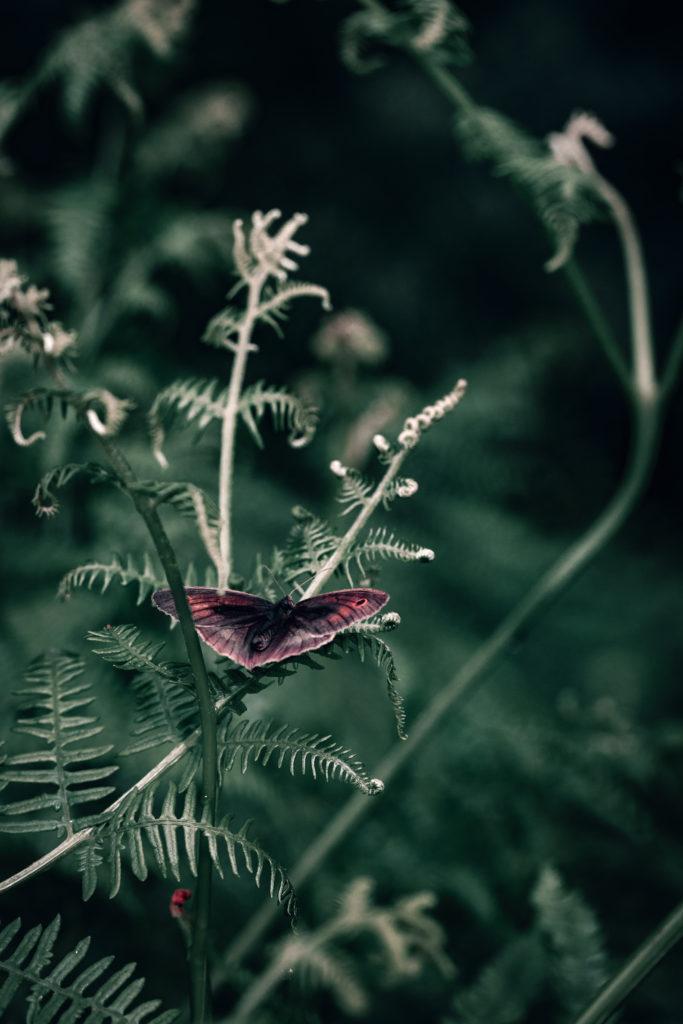Papillon sur fougère